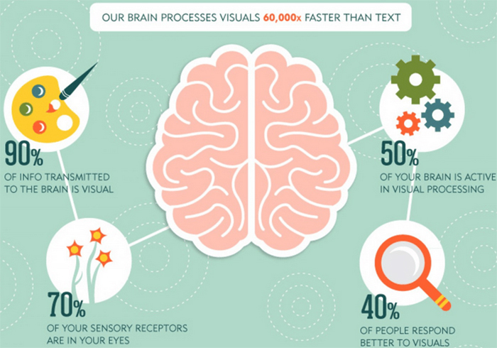 How our brain processes visuals
