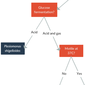 Bacteria Diachotomous Key Template