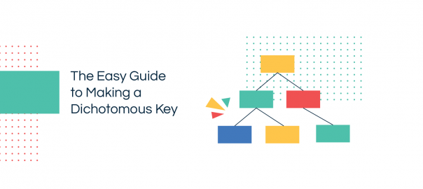 Making a Dichotomous Key with Editable Examples